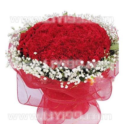 99枝红色康乃馨一束