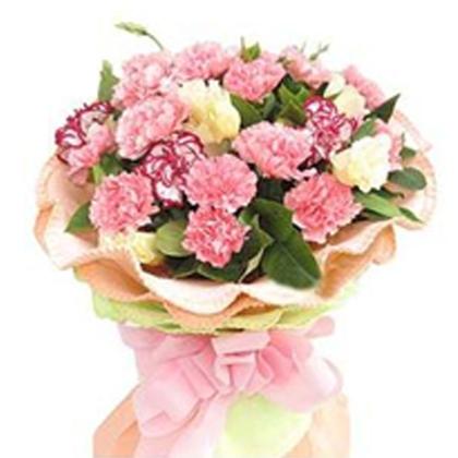 19枝红色康乃馨加5枝紫边康乃馨鲜花一束