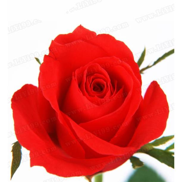 男同事喜欢我送一朵红玫瑰给我,我说不要,他说只是同事之间送我,没有